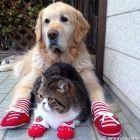 Dog Oliver and Cat Arashi - best friends