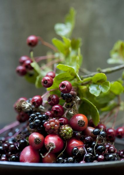 by Diana Miller.  Yup, hawthorn berries on the way and the rose hips are fat and juicy right now.