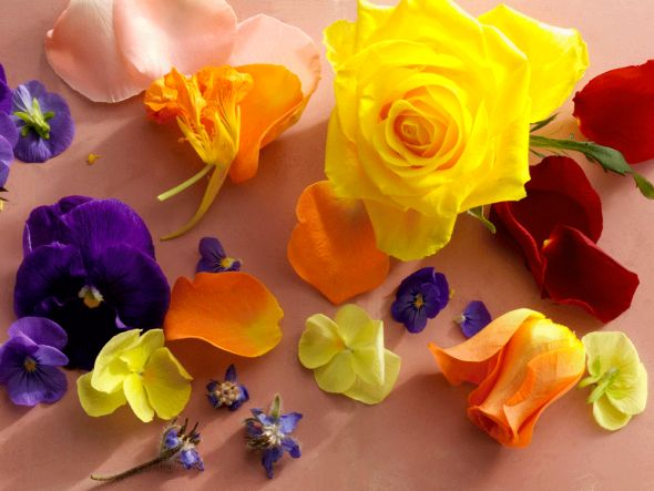 Hier findet ihr eine Sammlung der gängigsten essbaren Blüten, Tipps wo ihr sie kaufen könnt, wie die einzelnen Sorten schmecken und zu welchen Gerichten sie passen.