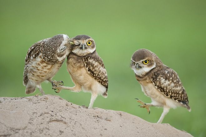 Wildlife photography competition awards  Owls