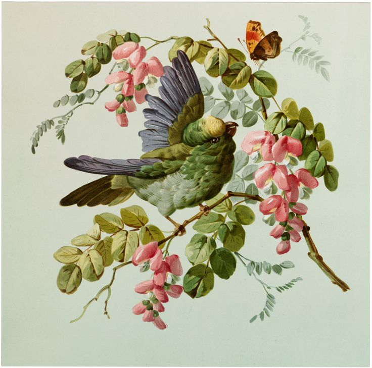 Vintage Fancy Bird with Flowers Image - Beauty! - The Graphics Fairy