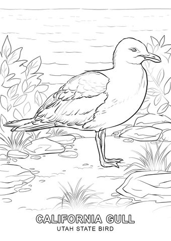 Utah State Bird Coloring Page And Other State Symbol Activities