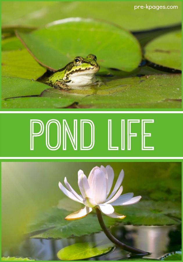 1000 images about POND THEME on