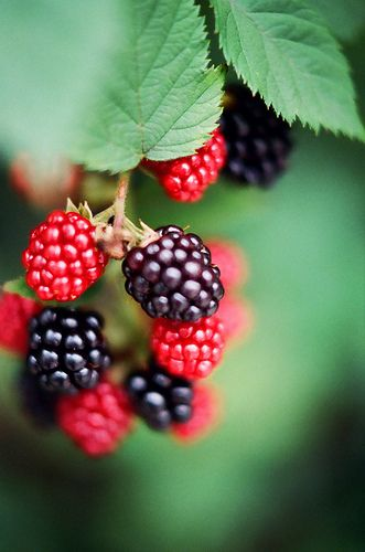 Blackberries fresh off the vine are the best. Look for a local or nearby u-pick. Bring the family and have a picnic.