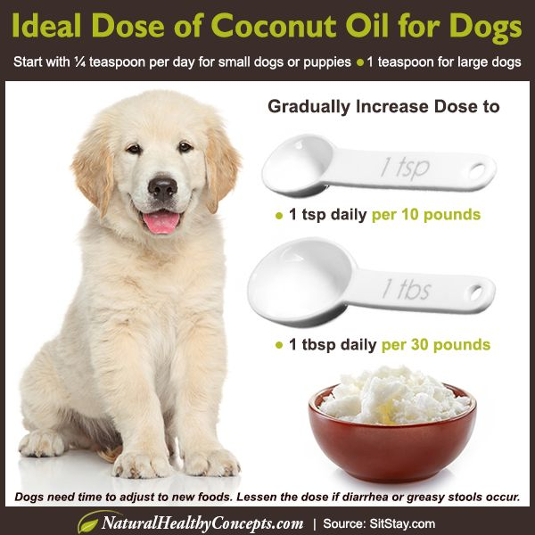 Have you heard the coconut oil craze? Did you know you can also use coconut oil for dogs? Learn about seven ways to keep your pet healthy naturally!