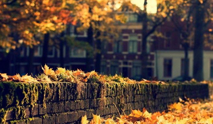 осень фото -7-09