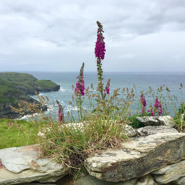 This photograph was taken by Emily Chard on the South-West coastal path near Tintagel Cornwall. If you have a photograph that you would like to share with the #englandsbigpicture gallery send it to england@bbc.co.uk #england #picoftheday #photooftheday #photosofbritain #photosofengland #top_10_pics_of_the_week #ukpotd #capturingbritain #england2017 #englandphotography #englandinpictures #tintagel #cornwall #flowers #landscape #landscapephotography #coastal #coast