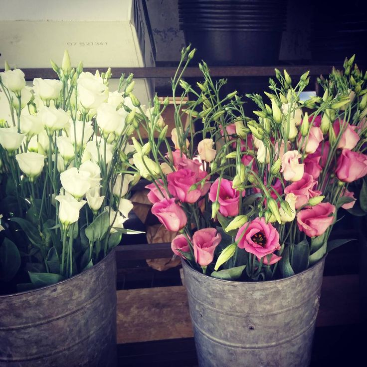 Inspiration, flowers, soft colours