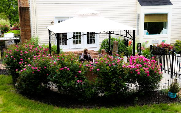 Landscaping Ideas Around Screened Pool : Roses bushes and gazebo for landscaping around a pool