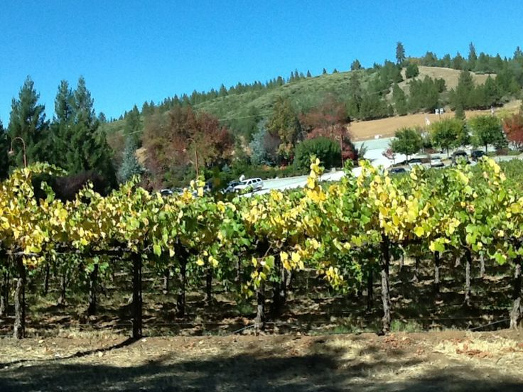 calaveras vineyards+essay Calaveras vineyards essay jd(u)-led coalition which includes rjd and indian national congress are dissertation writing services legal research paper o autism.