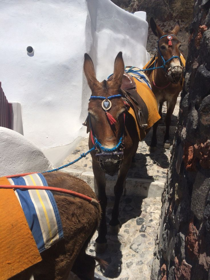 Donkeys of Oia, Santorini