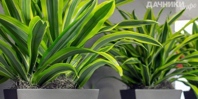 Самые популярные растения для ленивых хозяек - Подробности: http://dachniki.info/samye-populyarnye-rasteniya-dlya-lenivyx-xozyaek-3258.html