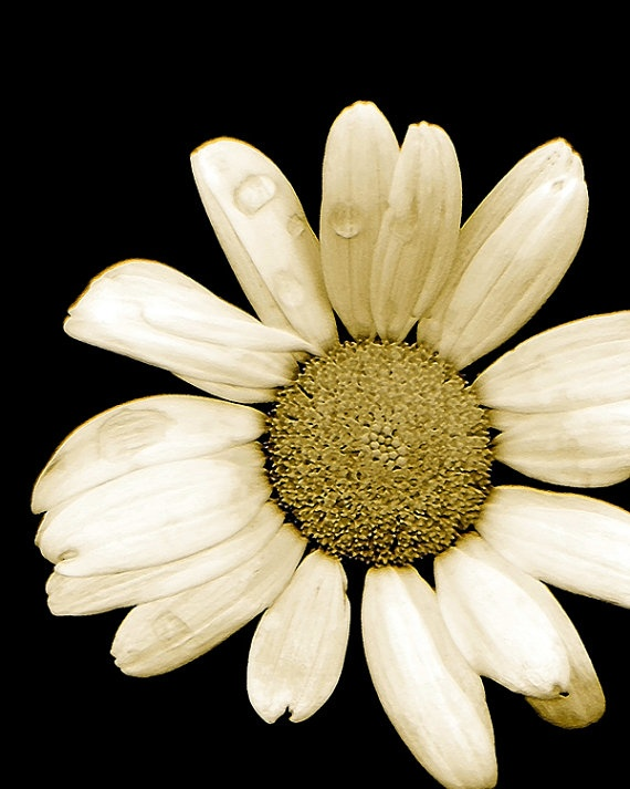 Floral Simplistic Decorative Floral Artwork by MissDawnFineArt, $9.00