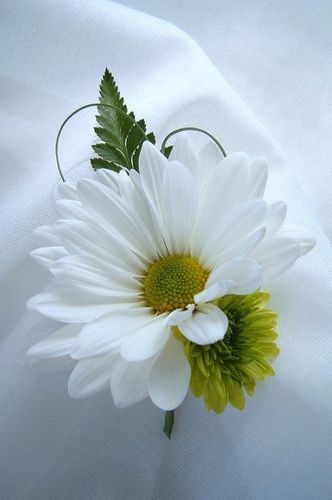 boutonniere daisy white green grass  ~ family reunion for elders maybe?