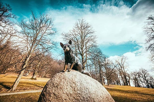 Cíhá :) . . .  #fox #castle #music #leosjanacek #liska #hukvaldy #obora #spring #jaro #palkovickehurky #trip #walk #explore #nature #lovenature #landscape #sky #cloudy #sunny #instagood #vsco #saturday #frydekmistek #from #ostrava #ostravacity #by #janjasiok