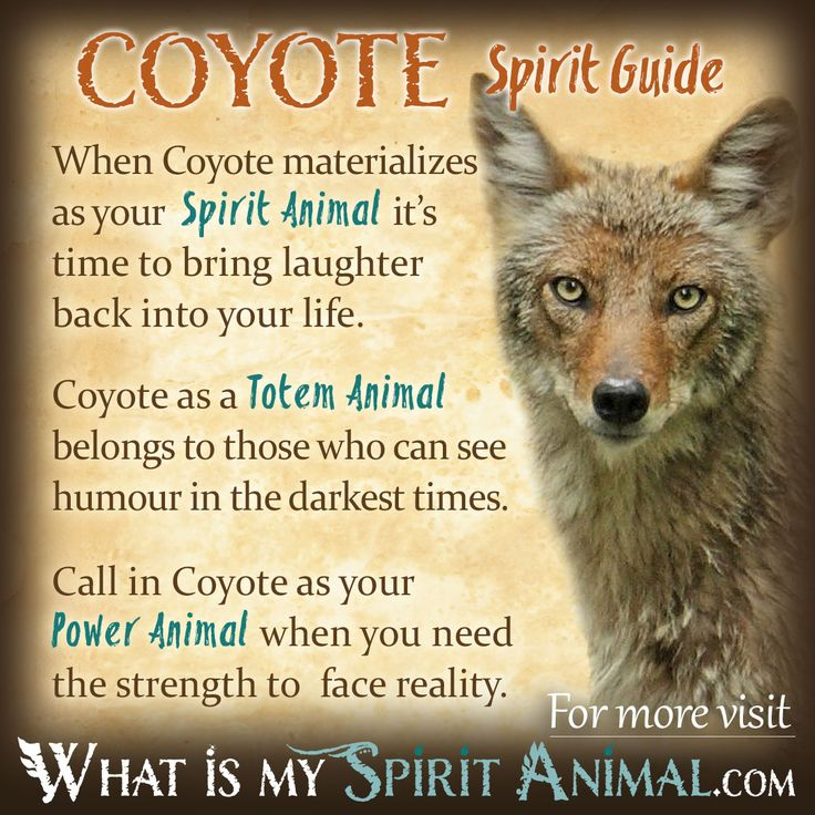 Coyote Spirit, Totem, & Power Animal Symbolism and Meaning 1200x1200