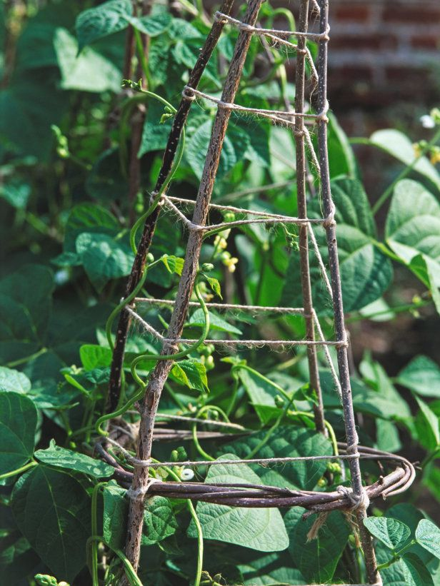 157 Best Climbing Frames Amp Plant Trellis Images On