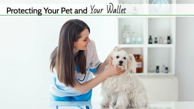Top 3 Best Pet Insurance Companies For 2020 Comparison And