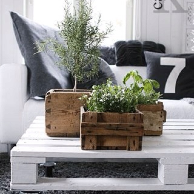 Plants in crates - room decor