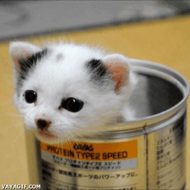 90 best images about Baby Kittens =^.^= on Pinterest | Orange ...