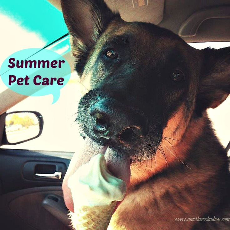 Come read some summer tips for help during the fireworks, heat and other ideas to keep your pet safe and happy. www.amothersshadow.com