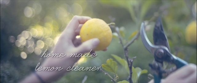 Home Made Cleaner using Lemons. DIY series - this film shows us how to make home made surface cleaner using lemon peels, vinegar, water, vanilla and rosemary.
