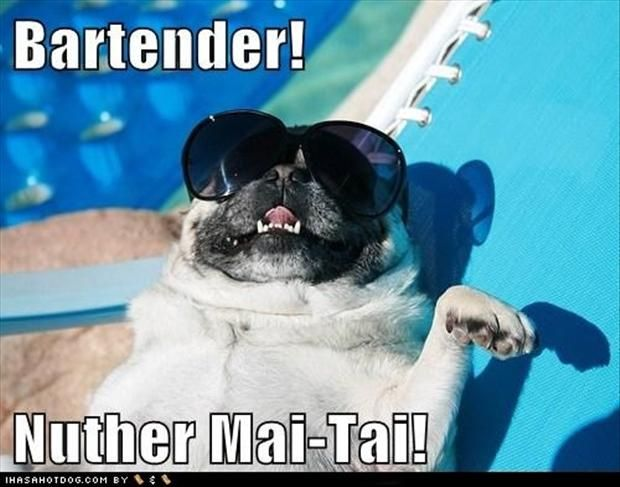 I M On Vacation Funny Meme : Best images about pug humor and cuteness on pinterest