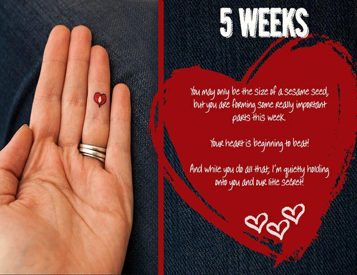 gravid i uge 4