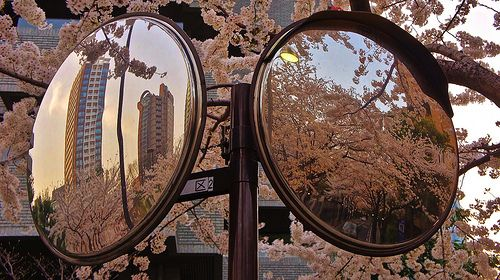 Sakura, cherry blossoms reflected in traffic mirrors on pavement. Pure observation