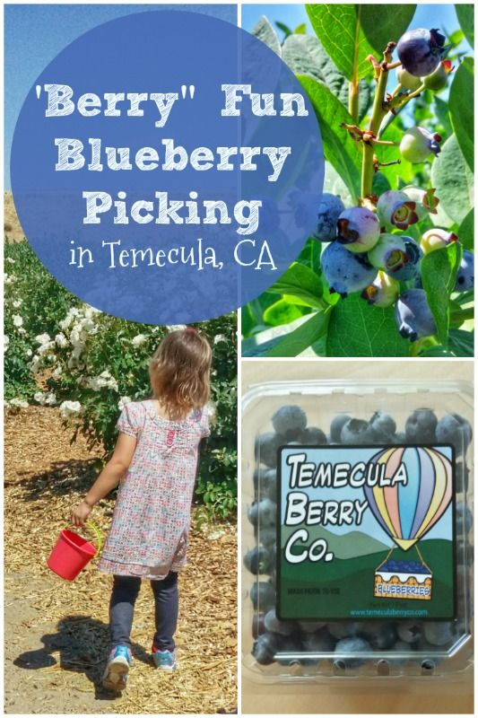 It's worth the drive to pick fresh blueberries and have a great time with your kids! #temeculaberryco #freshblueberriesareamazing