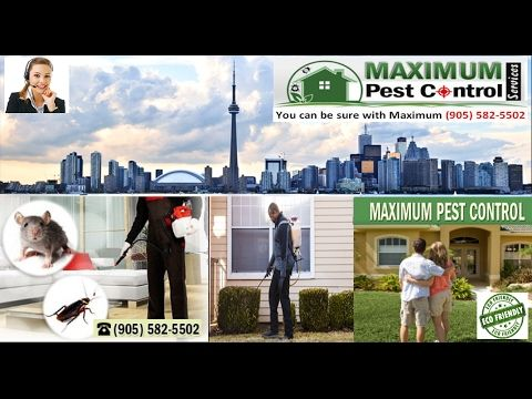 If you are looking for a few reputed Mice Professional Exterminators Company http://ift.tt/1eIZPl4 (905) 582 5502. Offering mice and rats elimination services you must surf the internet and check out their previous reviews that can be found here. Apart from rodents causing trouble at your home you may also face problems on account of ants or bedbugs and fleas. The stress of needing these rodents and pests destroy your property is extreme. Many families handle problem every year.   If you…