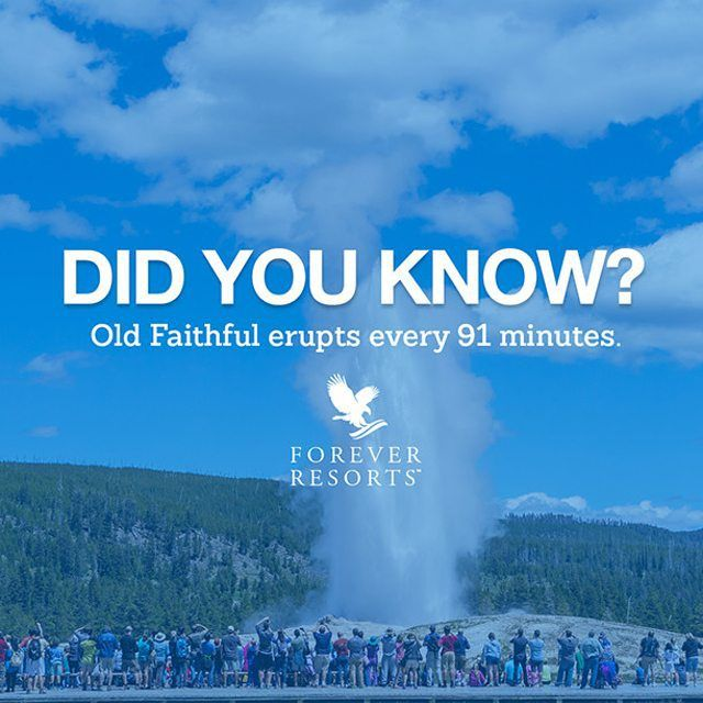 SnapWidget | Old Faithful was the first geyser in Yellowstone to receive a name way back in 1870. Its name was earned by being one of the most predictable geographical features on Earth, erupting almost every 91 minutes. #ForeverFunFact #FunFactFriday