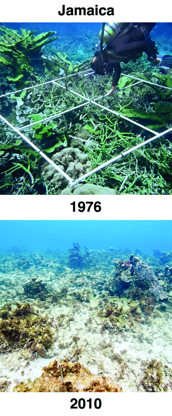 The powerful before-and-after photographs below were shared as evidence of ocean acidification at the 2012 International Coral Reef Symposium in Australia. Please help spread awareness about ocean acidification by pinning these before-and-after photos and starting the conversation about ocean conservation. #OceanAcidification