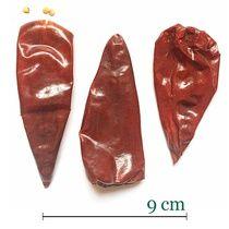 Chilli papričky Yidu
