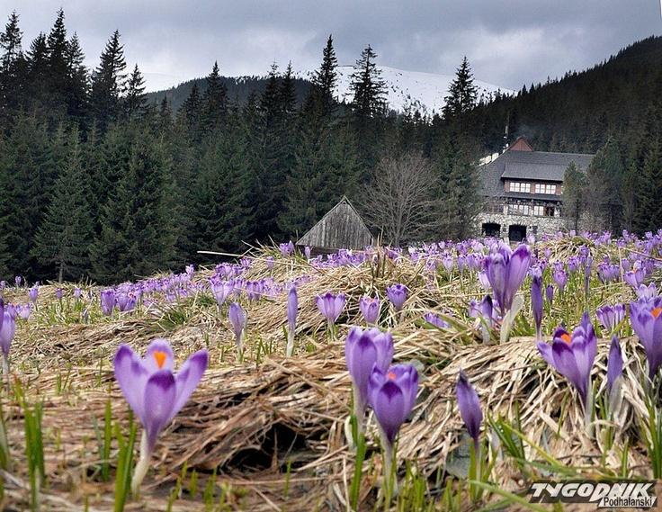#Poland: Spring in Tatry, Zakopane