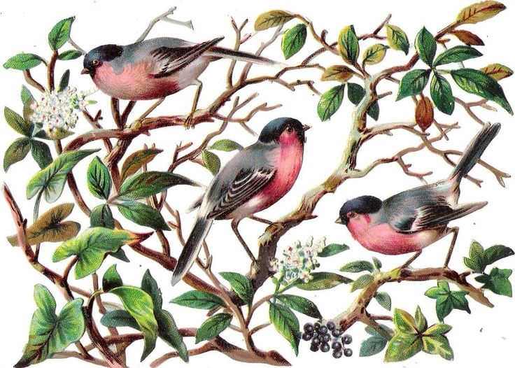 Oblaten Glanzbild scrap die cut chromo Vogel bird  17cm oiseau Ast branch Blüten