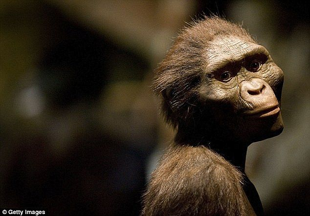 Australopithecus afarensis was one of the longest-lived and best known early human species (reconstruction pictured). The species, whose most famous fossil 'Lucy' comes from Ethiopia, roamed the Earth around 3.2 million years ago - but recent evidence has suggested they were not alone