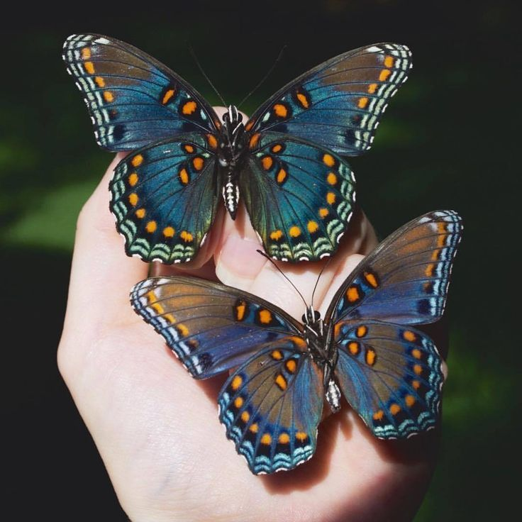 6 Different Types Of Butterflies Types Of Butterflies Butterfly Pictures Insects