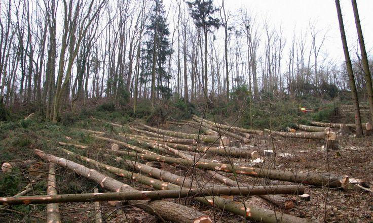 Umweltschützer warnen vor der Abholzung, die ohne Kontrolle immer größere Ausmaße annimmt. Das Geschäft ist lukrativ – auch für mitteleuropäische Unternehmen.