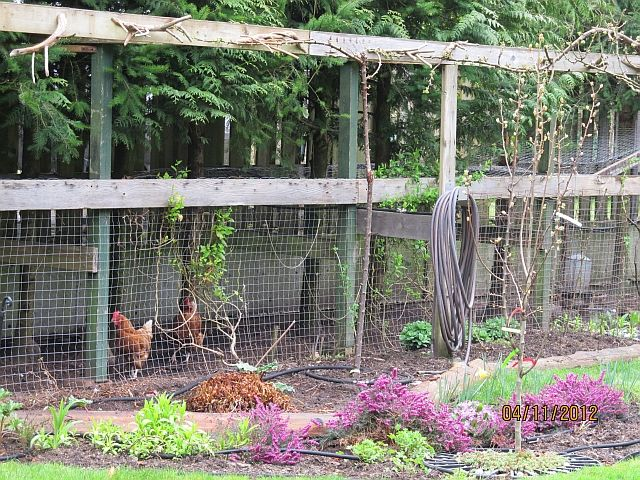 a chicken moat around and incorporated into a garden.  i'm so obsessed with this right now.