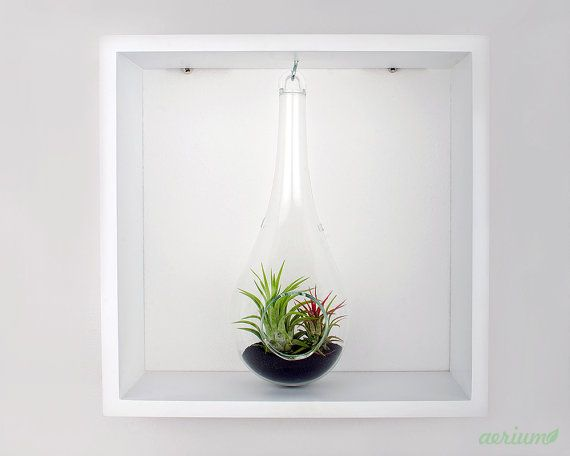 Framed Airplant Terrarium Decorate your walls with this minimalist framed terrarium or just let it live on your desk. Available with black frame, also. https://www.etsy.com/shop/Aerium