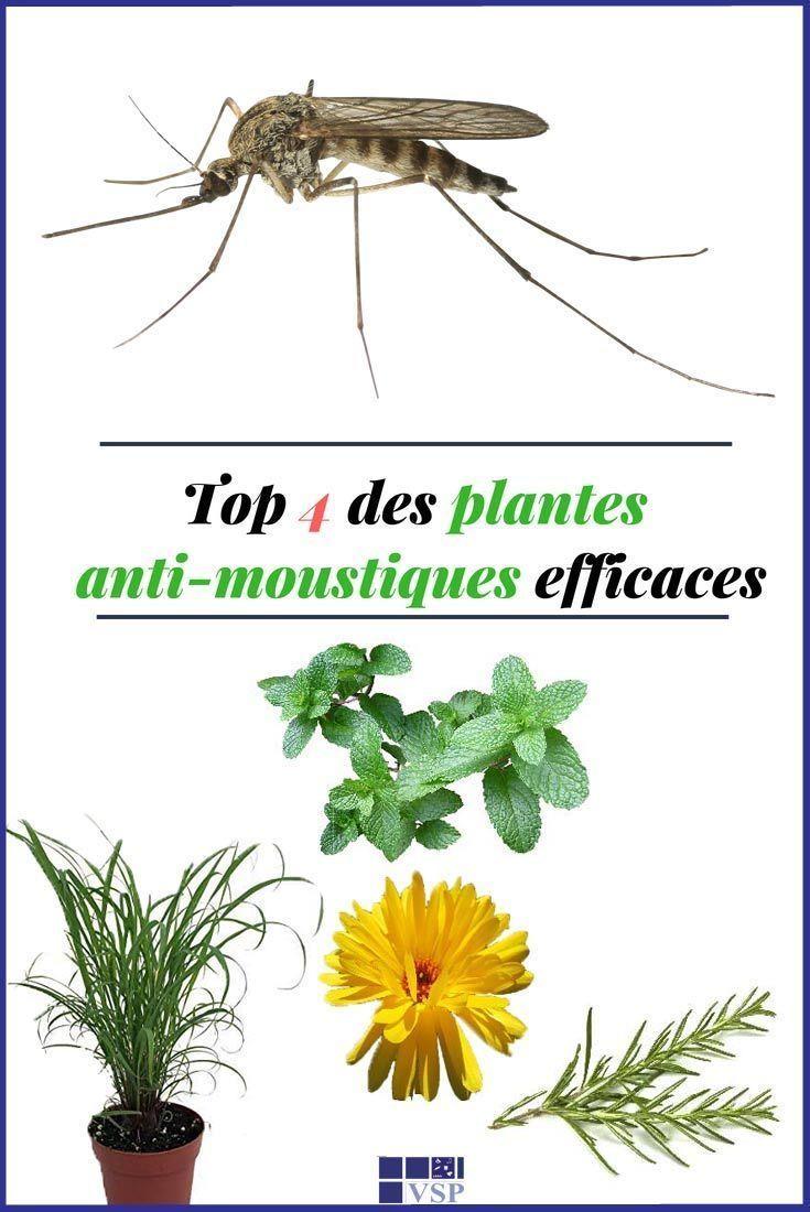 top 4 des plantes anti moustiques efficaces astuce. Black Bedroom Furniture Sets. Home Design Ideas