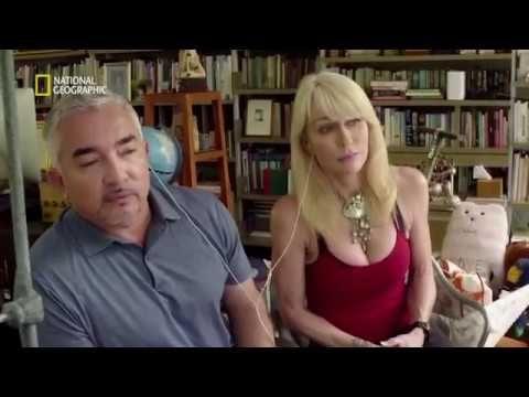 How to teach a dog by Cesar Millan (Dog Whisperer) - YouTube