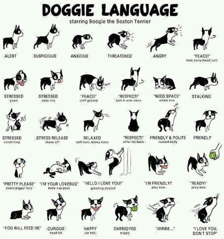 Doggie talk