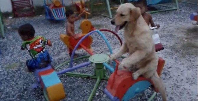 Watch: A Dog Rides A Carousel With His Friends