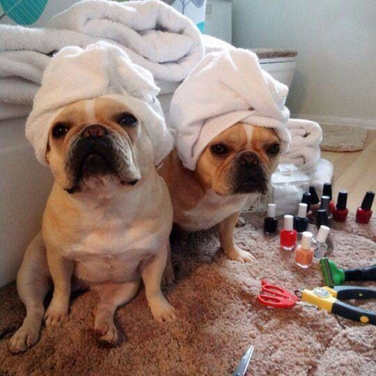 17 Best Images About Spa Funnies On Pinterest