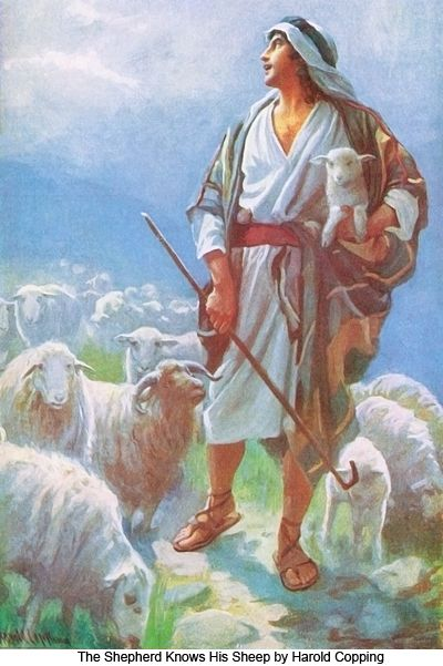 1000 Images About The Good Shepherd On Pinterest