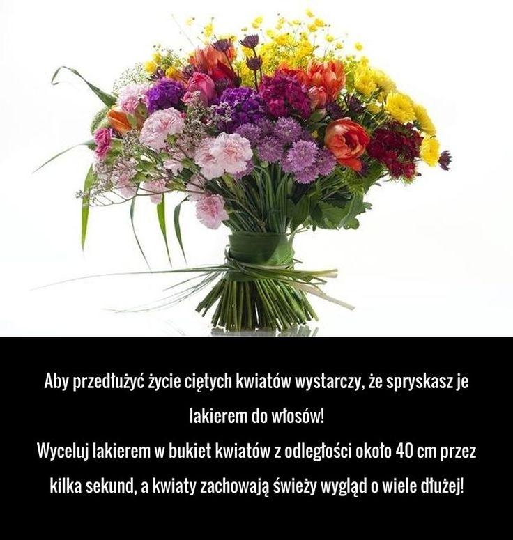 Swietny Trik Na Przedluzenie Zycia Cietych Kwiatow O Ktorym Nie Wiesz Good Advice Plants Practical Advice
