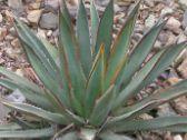 Top 10 endangered plants - Platanthera praeclara only exists in five U.S…