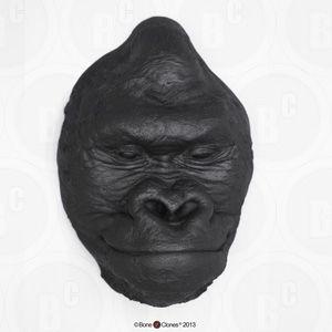 Male Gorilla Head (Life Cast) LC-21